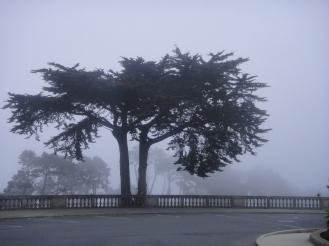 Cyprus tree in fog outside the Legion of Honor, San Francisco, CA (c) Winter Shanck, 2012