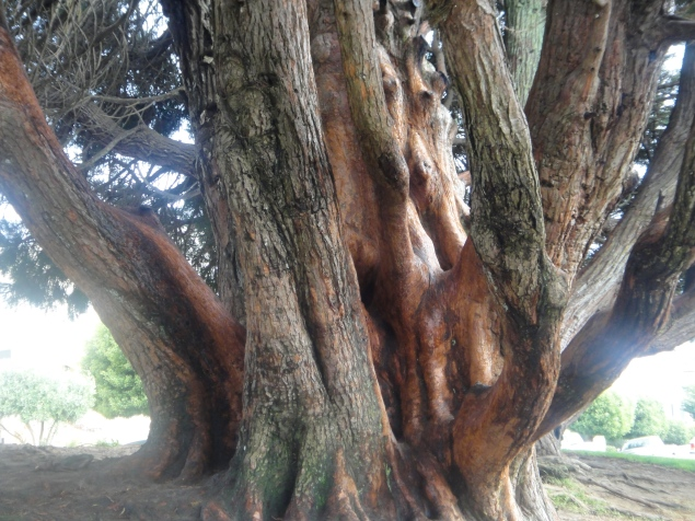Giant tree, near the Place of Fine Arts, San Francisco, CA (c) Winter Shanck, 2012
