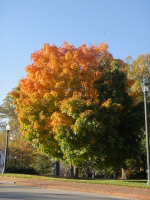 Tree, Virginia State Capitol (c) Winter Shanck, 2013